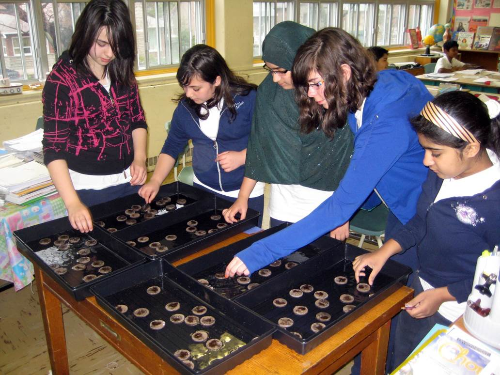 High school students viewing seeds