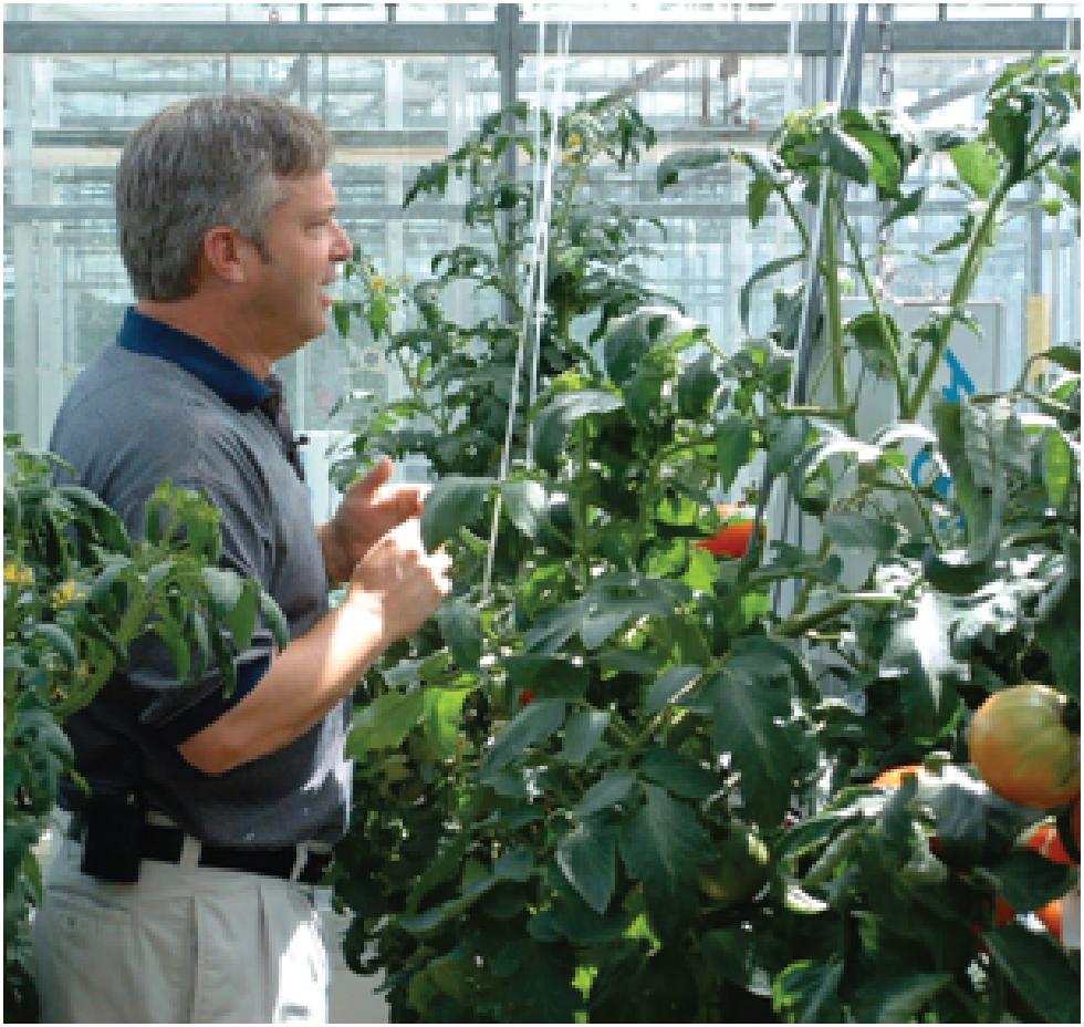 michael-dixon-tomatoes